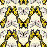 Seamless butterfly ornament Royalty Free Stock Images