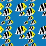 Seamless butterflyfish pattern Royalty Free Stock Photography