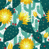 Seamless cactus background Stock Images