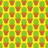 Seamless cactus plants for the home. Stock Photos