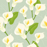 Seamless Calla Lily. Floral background Stock Photography