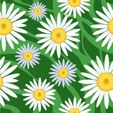 Seamless camomile background Royalty Free Stock Images