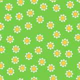 Seamless camomile pattern Royalty Free Stock Photography