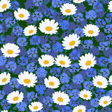 Seamless camomiles and cornflower pattern. Seamless pattern with camomiles and cornflower background Royalty Free Stock Photos