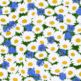Seamless camomiles and cornflower pattern Stock Image