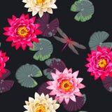 Seamless carps and lotus Royalty Free Stock Photography