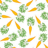 Seamless carrot texture. Endless vegetable background. Vector. Stock Images