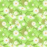 seamless chamomile stock illustrationer