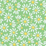 Seamless chamomile background Stock Photos