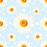 Seamless chamomile pattern on blue background Stock Images