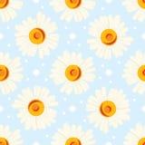 Seamless chamomile pattern on blue background. Royalty Free Stock Image