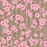 Seamless cherry, sakura blossom flowers pattern vector illustration