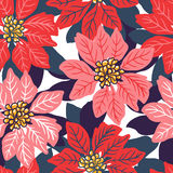 Seamless Christmas background with red and pink poinsettias. Stock Photo