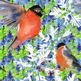Seamless christmas pattern. Bullfinch on fir tree. Watercolor Royalty Free Stock Image