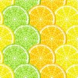 seamless citrus Royaltyfri Fotografi