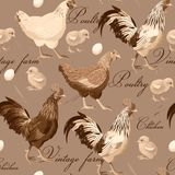 Seamless cocks and hens. Cocks, hens and chickens vintage vector seamless background Stock Photography