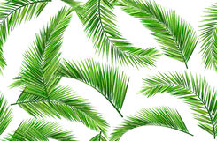 Seamless coconut leaves vector illustration