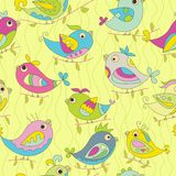 Seamless color background of parrots. Yellow backdround Royalty Free Stock Image