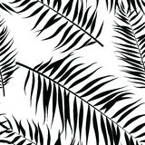 Seamless color palm leaves pattern. Flat style. Black and white Royalty Free Stock Image