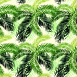 Seamless color palm leaves pattern Stock Photo