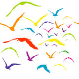 Seamless with colored birds Stock Images