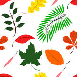 Seamless of Colored different leaves Royalty Free Stock Photos