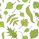 Seamless colored forest leaves pattern. Vector vintage colored engraved illustration of green veaves. Green leaves royalty free illustration