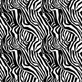 Seamless colorful animal skin texture of zebra Royalty Free Stock Photo