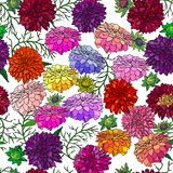 Seamless colorful background of dahlias. Vector illustration Royalty Free Stock Photography