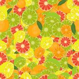 Seamless colorful background made of citrus fruits Royalty Free Stock Photo