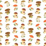 Seamless colorful background made of  different kind of mushroom Stock Photography
