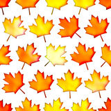 Seamless colorful maple-leaf texture, Isolation on a white background Stock Photography