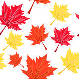 Seamless with colorful maples Stock Photo