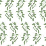 Seamless colorful pattern of Chinese Schisandra Royalty Free Stock Image
