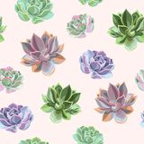 Seamless colorful succulents vector illustration