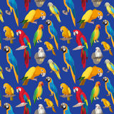 Seamless colorful tropical pattern with parrot bird. Stock Images