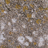 Seamless concrete texture with moss Royalty Free Stock Photos