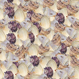 Seamless continuous background with seashells. Background of isolated seashell photos royalty free stock images