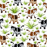 Seamless cow pattern Stock Photography