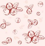 Seamless cranberry pattern stock illustration