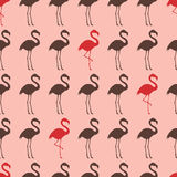 Seamless flamingo bird silhouette pattern Royalty Free Stock Photos