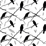Seamless crows, tree branches and feathers. Vector Royalty Free Stock Images