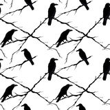 Seamless crows and tree branches. Vector Royalty Free Stock Photography
