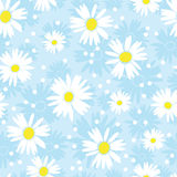 Seamless cute camomile background Stock Photos