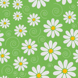 Seamless daisies  pattern Stock Photography