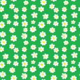 Seamless Daisies Pattern Stock Photos