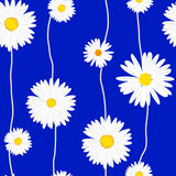 Seamless daisies vector pattern. Illustration for print or web design Stock Image