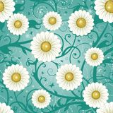 Seamless daisy background. Beautiful vector illustration, detailed drawing Royalty Free Stock Photo
