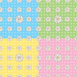 Seamless Daisy Pattern. In four colors Stock Photos