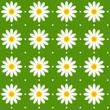 Seamless daisy pattern Stock Images